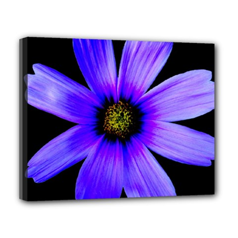 Purple Bloom Deluxe Canvas 20  x 16  (Framed)