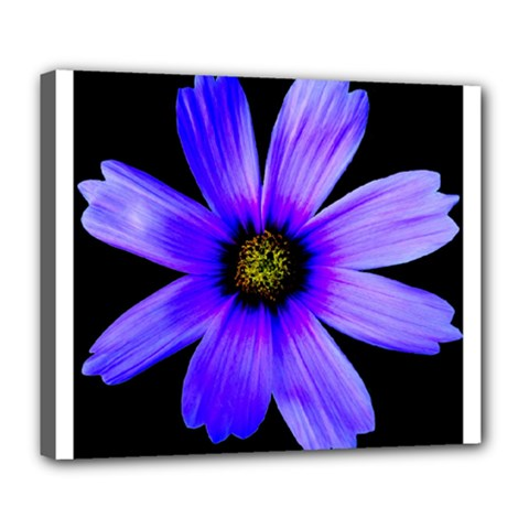 Purple Bloom Deluxe Canvas 24  x 20  (Framed)
