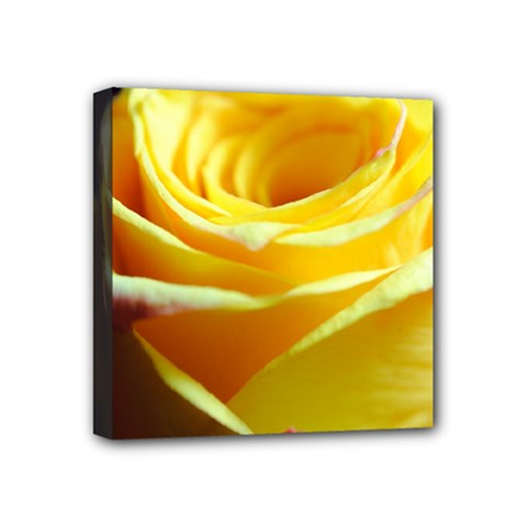 Yellow Rose Curling Mini Canvas 4  x 4  (Framed)