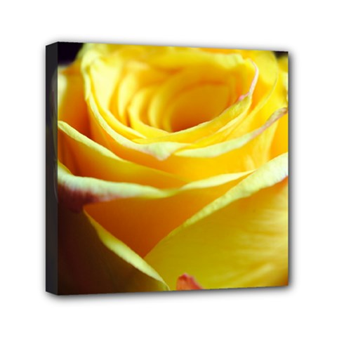 Yellow Rose Curling Mini Canvas 6  X 6  (framed)