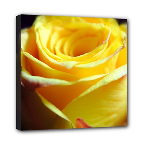 Yellow Rose Curling Mini Canvas 8  x 8  (Framed)