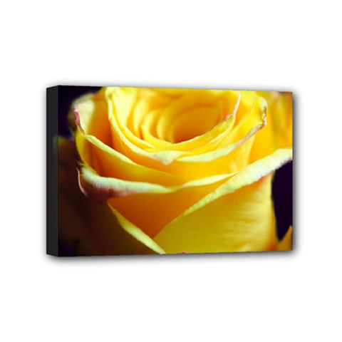 Yellow Rose Curling Mini Canvas 6  X 4  (framed)