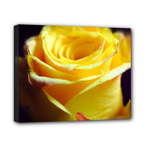 Yellow Rose Curling Canvas 10  X 8  (framed)