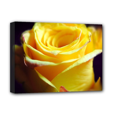 Yellow Rose Curling Deluxe Canvas 16  x 12  (Framed)