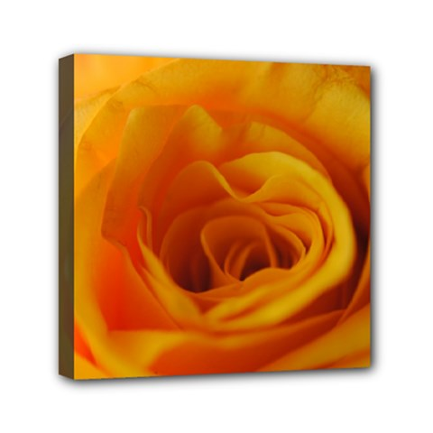 Yellow Rose Close Up Mini Canvas 6  x 6  (Framed)