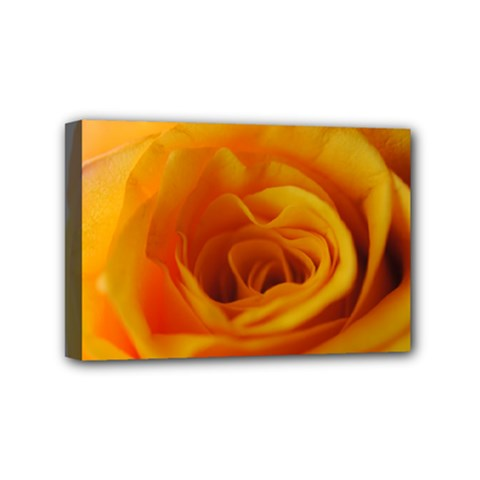 Yellow Rose Close Up Mini Canvas 6  x 4  (Framed)