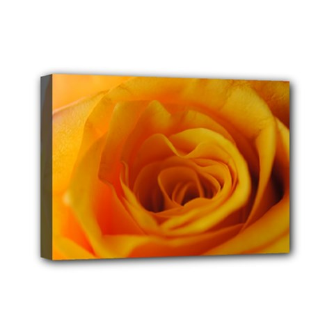 Yellow Rose Close Up Mini Canvas 7  x 5  (Framed)