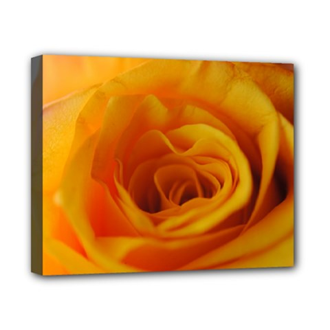 Yellow Rose Close Up Canvas 10  x 8  (Framed)