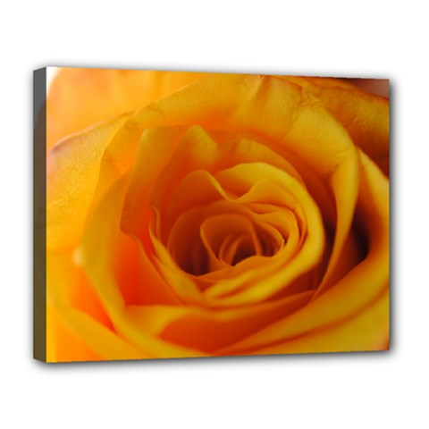 Yellow Rose Close Up Canvas 14  x 11  (Framed)