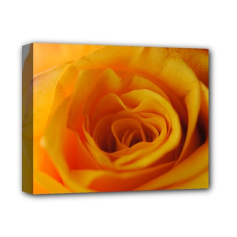 Yellow Rose Close Up Deluxe Canvas 14  x 11  (Framed)