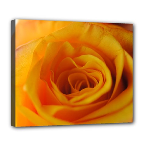 Yellow Rose Close Up Deluxe Canvas 24  X 20  (framed)