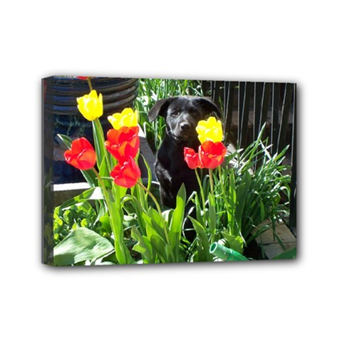 Black GSD Pup Mini Canvas 7  x 5  (Framed)