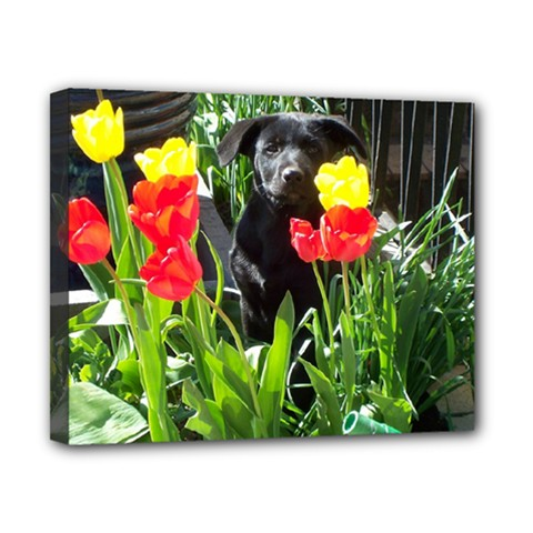Black GSD Pup Canvas 10  x 8  (Framed)