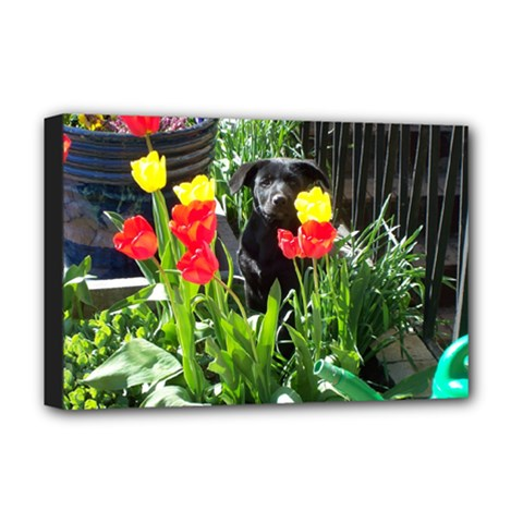 Black GSD Pup Deluxe Canvas 18  x 12  (Framed)
