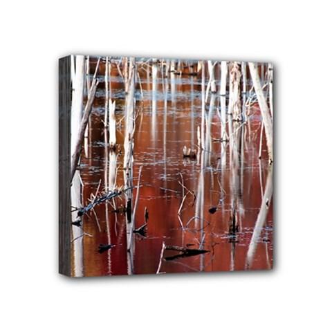 Automn Swamp Mini Canvas 4  x 4  (Framed)