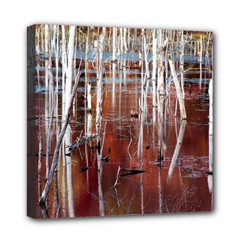 Automn Swamp Mini Canvas 8  x 8  (Framed)