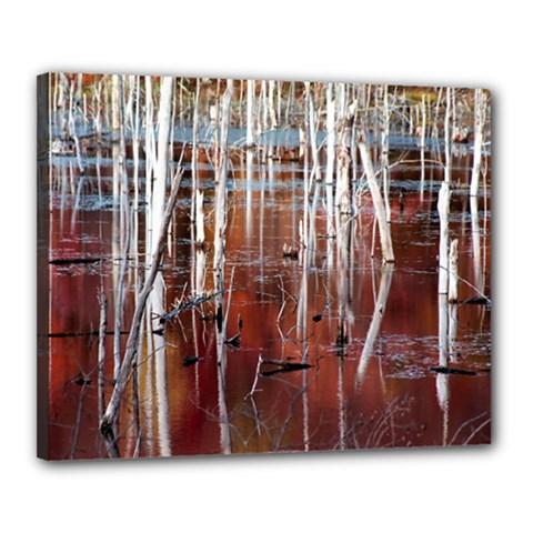 Automn Swamp Canvas 20  x 16  (Framed)