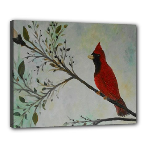 Sweet Red Cardinal Canvas 20  X 16  (framed)