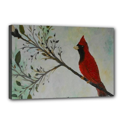 Sweet Red Cardinal Canvas 18  x 12  (Framed)