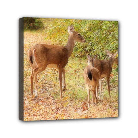Deer In Nature Mini Canvas 6  X 6  (framed)