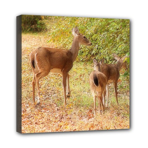 Deer In Nature Mini Canvas 8  X 8  (framed)