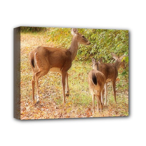 Deer in Nature Deluxe Canvas 14  x 11  (Framed)