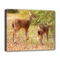 Deer in Nature Deluxe Canvas 20  x 16  (Framed) View1