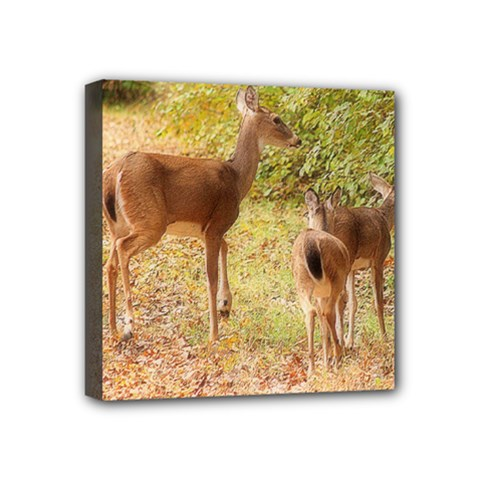 Deer in Nature Mini Canvas 4  x 4  (Framed)