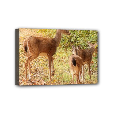 Deer in Nature Mini Canvas 6  x 4  (Framed)