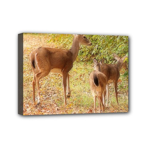 Deer in Nature Mini Canvas 7  x 5  (Framed)
