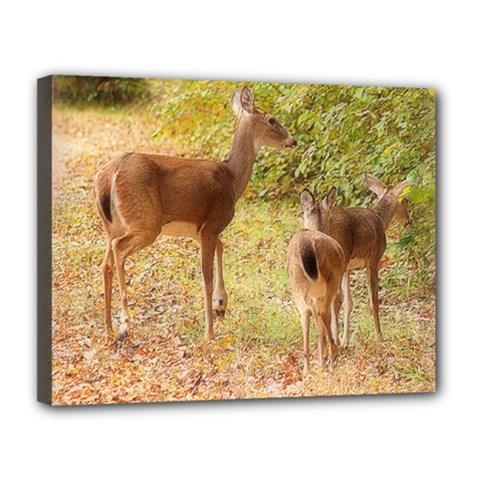Deer In Nature Canvas 14  X 11  (framed)
