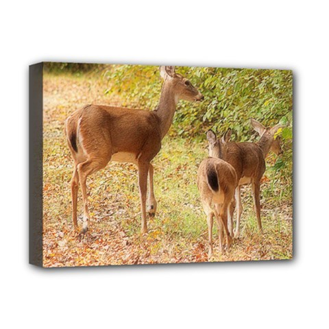 Deer in Nature Deluxe Canvas 16  x 12  (Framed)