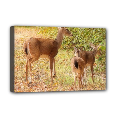 Deer in Nature Deluxe Canvas 18  x 12  (Framed)