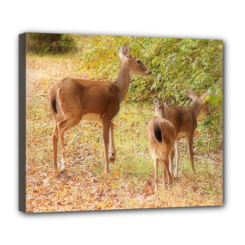Deer in Nature Deluxe Canvas 24  x 20  (Framed)