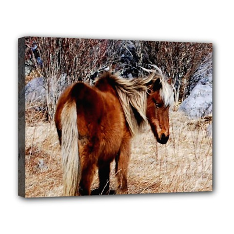 Pretty Pony Canvas 14  x 11  (Framed)