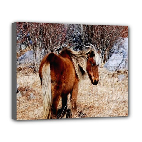 Pretty Pony Deluxe Canvas 20  x 16  (Framed)