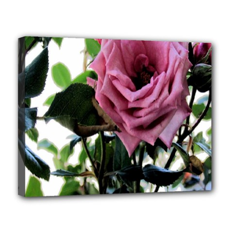 Rose Canvas 14  x 11  (Framed)
