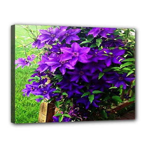 Purple Flowers Canvas 16  x 12  (Framed)