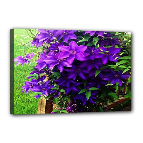 Purple Flowers Canvas 18  x 12  (Framed)