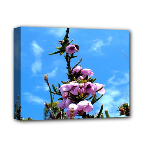 Pink Flower Deluxe Canvas 14  X 11  (framed)