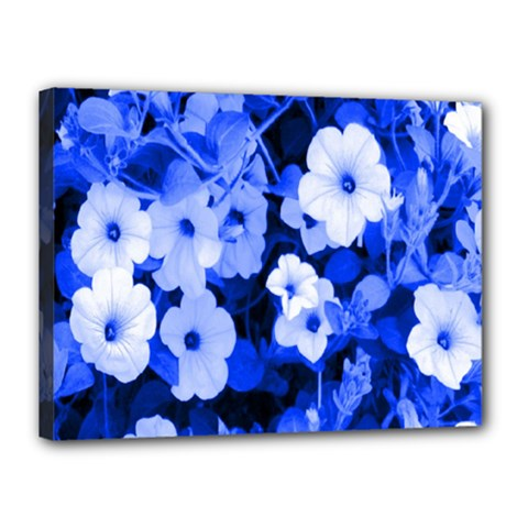 Blue Flowers Canvas 16  x 12  (Framed)