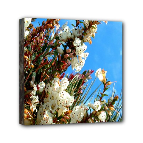 Australia Flowers Mini Canvas 6  x 6  (Framed)
