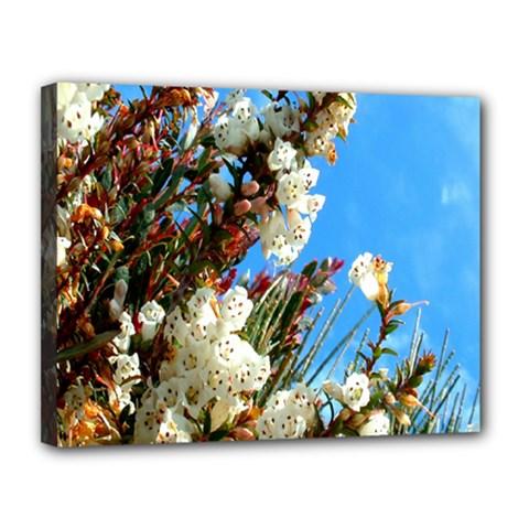 Australia Flowers Canvas 14  x 11  (Framed)