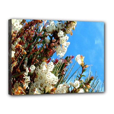 Australia Flowers Canvas 16  x 12  (Framed)