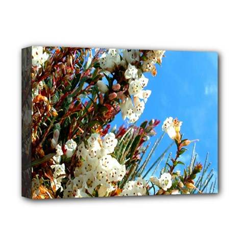 Australia Flowers Deluxe Canvas 16  x 12  (Framed)