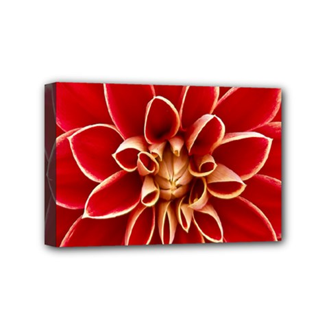 Red Dahila Mini Canvas 6  x 4  (Framed)