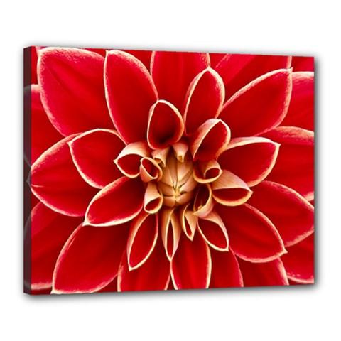 Red Dahila Canvas 20  x 16  (Framed)