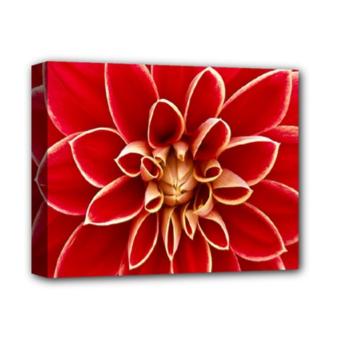 Red Dahila Deluxe Canvas 14  x 11  (Framed)