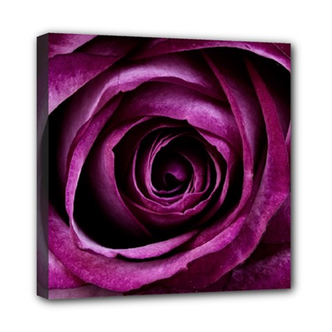 Deep Purple Rose Mini Canvas 8  x 8  (Framed)