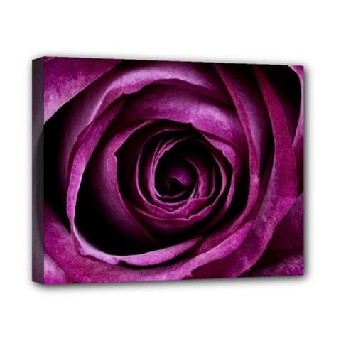 Deep Purple Rose Canvas 10  x 8  (Framed)